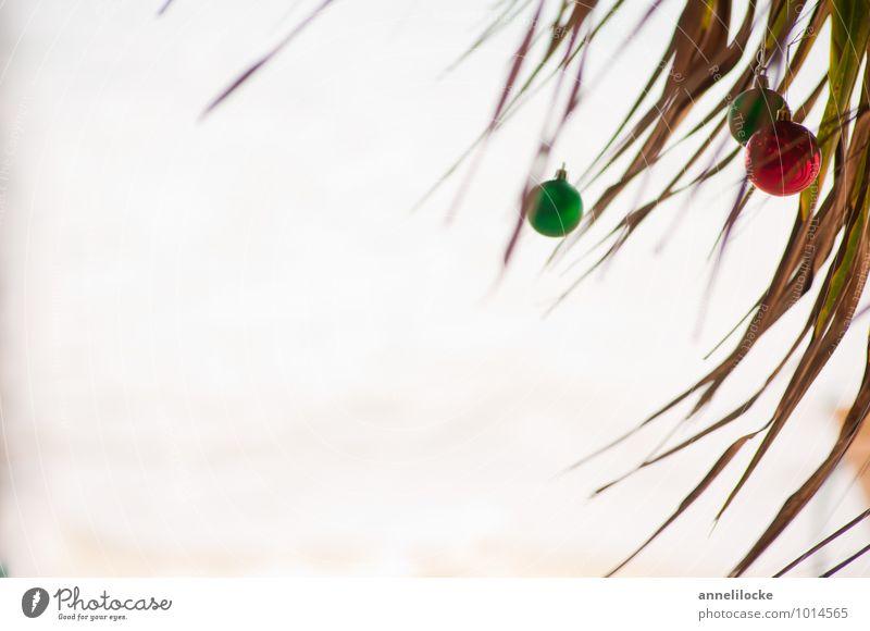 Karibische Weihnachten Ferien & Urlaub & Reisen Weihnachten & Advent Pflanze grün Sommer Baum Meer rot Strand Ferne Umwelt Küste Tourismus Kugel Sommerurlaub