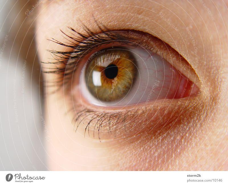Blickkontakt Frau Pupille Wimpern Augenbraue Nahaufnahme Makroaufnahme Gesicht Mensch Kopf Haut