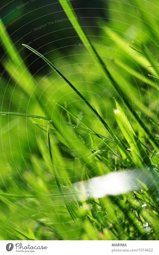 photo of green gras, detail ruhig Landwirtschaft Forstwirtschaft Pflanze Gras Wiese Wachstum grün bio biologisch biologically grass Halm blade of grass