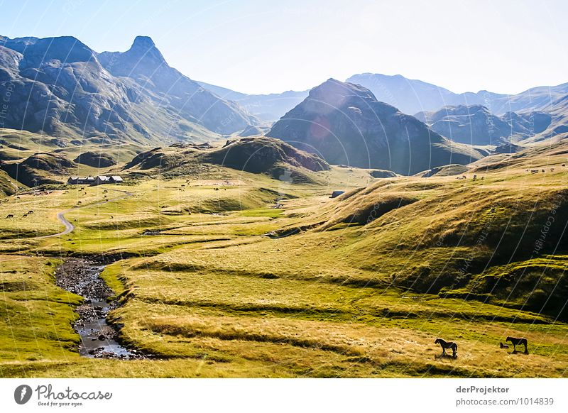 Wo ist Frodo? Natur Ferien & Urlaub & Reisen Pflanze Sommer Landschaft Tier Ferne Berge u. Gebirge Umwelt Gefühle Wiese Freiheit Felsen Freizeit & Hobby