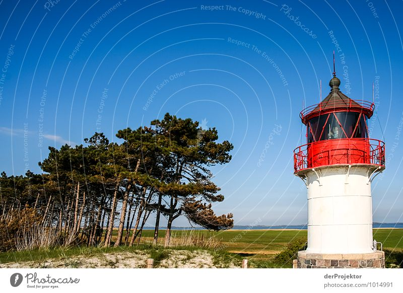 Der unbekanntere Leuchtturm auf Hiddensee Natur Ferien & Urlaub & Reisen Pflanze Sommer Baum Meer Landschaft Strand Ferne Umwelt Küste Freiheit Wellen Tourismus