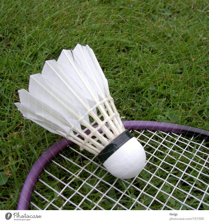 ein Federball liegt auf einem Badmintonschläger im Gras Bespannung Spielen Freizeit & Hobby grün weiß violett Sport Rahmen Rasen liegen Außenaufnahme