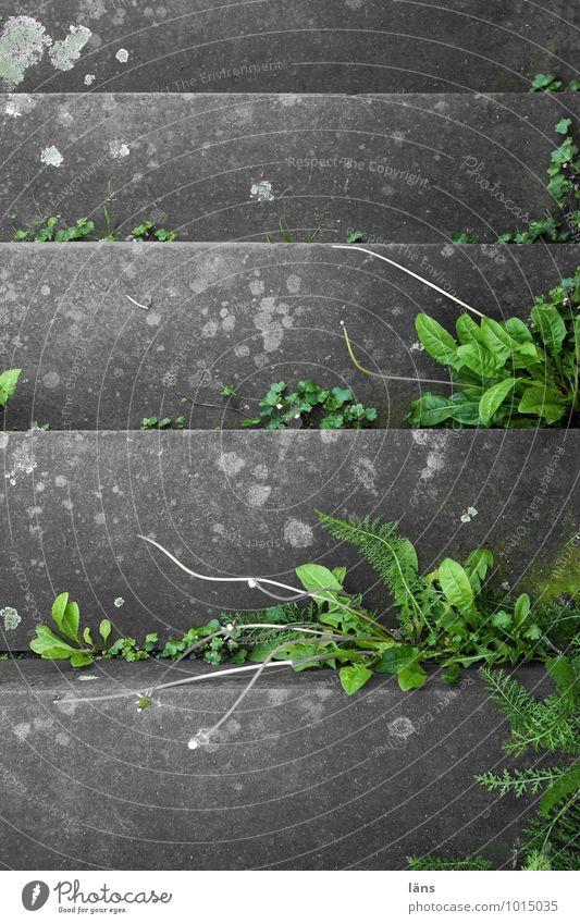 stufenweise Pflanze grün grau Treppe Wachstum Beton Beginn Wandel & Veränderung Grünpflanze Wildpflanze
