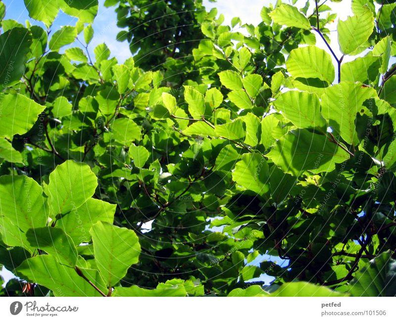 Im Garten Eden VI Baum grün Sommer Frühling Mount Eden Götter gelb Wolken blau Ast Baumstamm Sonne Wetter Gott Freude Natur