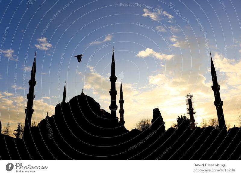 Abendstimmung - Blaue Moschee Himmel Ferien & Urlaub & Reisen Stadt blau weiß Wolken schwarz gelb Religion & Glaube Vogel leuchten Tourismus Kirche Turm
