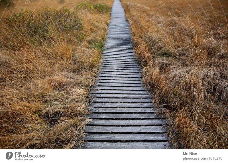 ohne umweg Ferien & Urlaub & Reisen Ausflug Freiheit Umwelt Natur Landschaft Pflanze Gras Sträucher Ziel wandern Hohes Venn Holzweg Moor Sumpf Idylle geradeaus