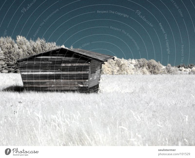 alleine... Infrarotaufnahme Farbinfrarot Schwarzfilter Wolken schwarz weiß Holzmehl Gras Wiese Pflanze grün Baum Waldrand Wäldchen Haus Einsamkeit Trauer