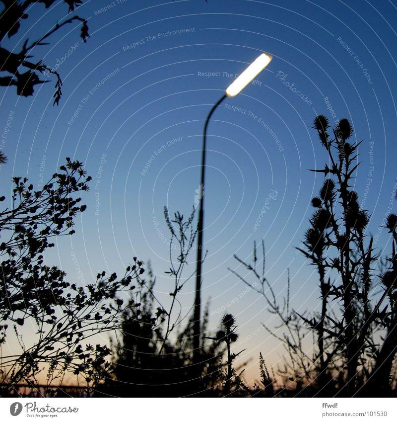 street light gloaming Natur Pflanze Lampe Stimmung Beleuchtung Technik & Technologie Laterne Straßenbeleuchtung Abenddämmerung glühen Elektrisches Gerät