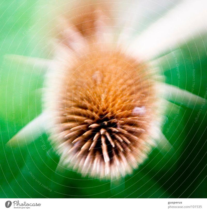 {cosmic s} Mikrofotografie Unschärfe stechen unklar Distel Torun Lomografie obskur Bewegung Weltall Ball stachelball Stachel Pflanze motion microcosm universe