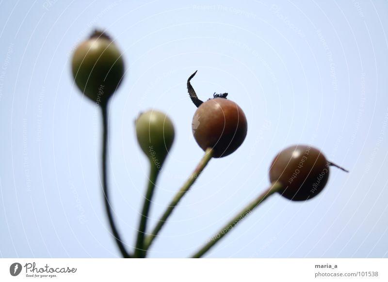 sticks Blume abstrakt Unschärfe vergangen rot grün Stengel Pflanze Garten Samen verblüht Himmel blau welk