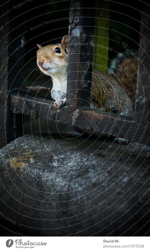 Hey wie geht's ? Natur schön Einsamkeit Tier Tierjunges Herbst grau Denken Freiheit Park Wildtier beobachten niedlich Freundlichkeit Neugier Fell