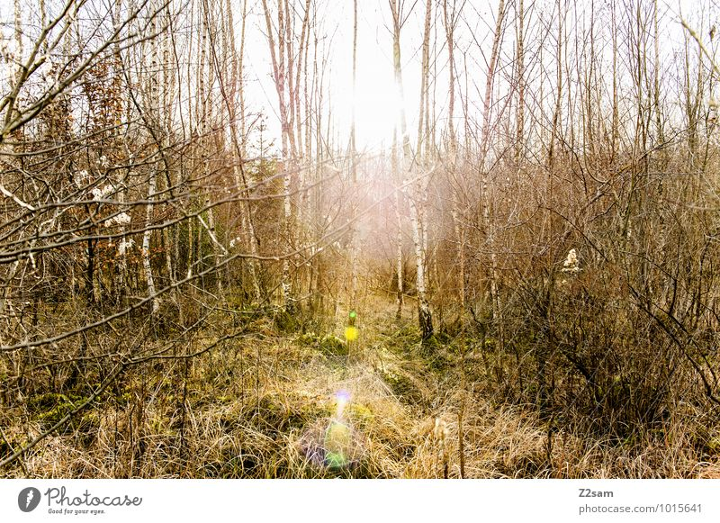 2200 Zauberwald Umwelt Natur Landschaft Sonne Sonnenlicht Frühling Schönes Wetter Baum Sträucher Wald nachhaltig natürlich Erholung Gefühle Idylle Perspektive