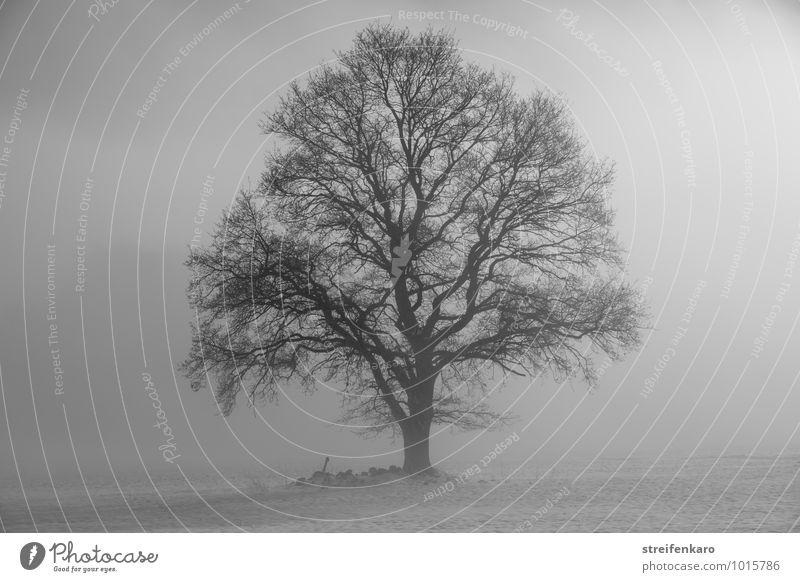 Einzelner Baum im Nebel auf verschneitem Feld Landschaft Pflanze Sonnenaufgang Sonnenuntergang Winter schlechtes Wetter Schnee Eifel dunkel Kraft trösten ruhig