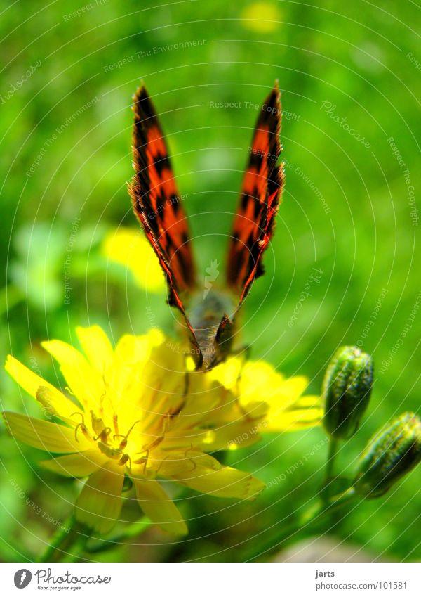 \flügel/ Schmetterling Wiese Blume Sommer Abheben schön Flügel Bündel Farbe jarts Luftverkehr