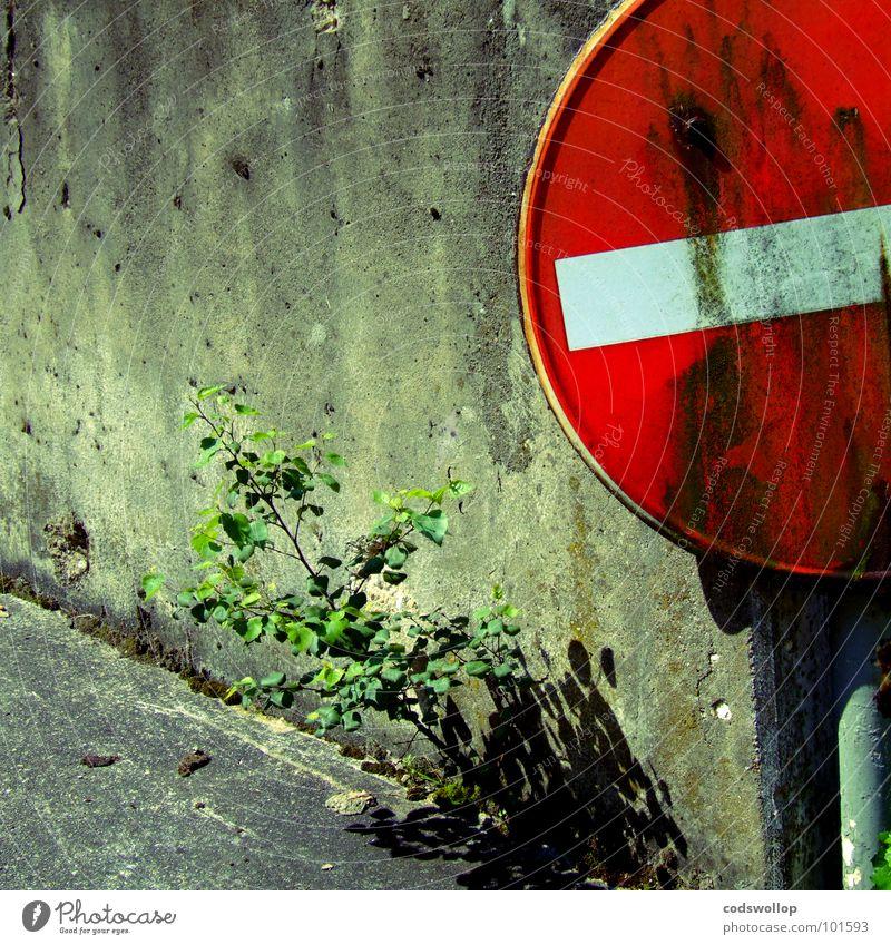 naturschutzgebiet Natur Pflanze Wand Mauer verfallen Hinweisschild Parkplatz Straßennamenschild