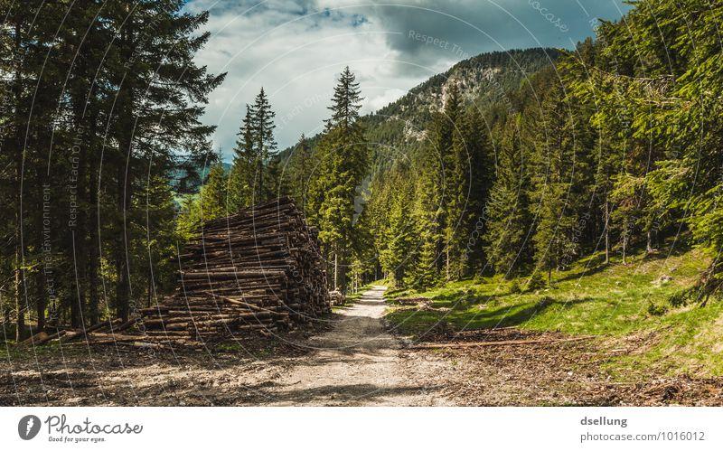 wohlfühlen. Umwelt Natur Landschaft Pflanze Himmel Wolken Sommer Klima Schönes Wetter Baum Wald Hügel Felsen Wege & Pfade Erholung genießen wandern