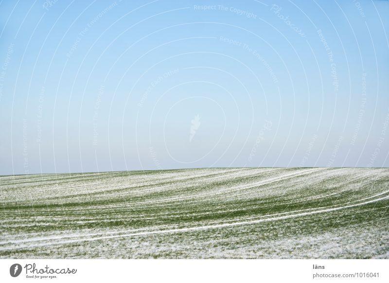 nur so Winter Schnee Landwirtschaft Forstwirtschaft Umwelt Natur Landschaft Himmel Wolkenloser Himmel Schönes Wetter Feld Hügel einfach kalt blau grün Beginn