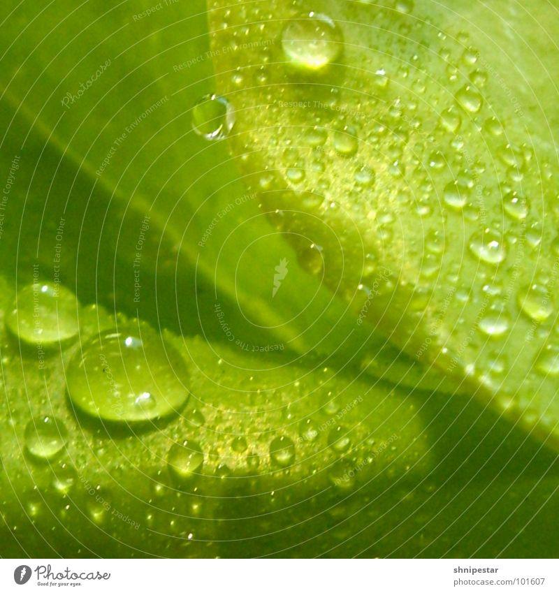 tri tra tropfner in LE vol. 3 grün Pflanze Sommer Blatt dunkel Wärme hell Wassertropfen nass nah Frieden Physik Quadrat Flüssigkeit Umzug (Wohnungswechsel)