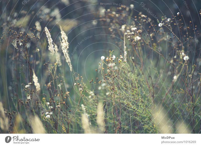 Wildblumen Umwelt Natur Landschaft Pflanze Urelemente Erde Luft Sonne Sonnenaufgang Sonnenuntergang Sonnenlicht Frühling Sommer Wetter Schönes Wetter Blume Gras