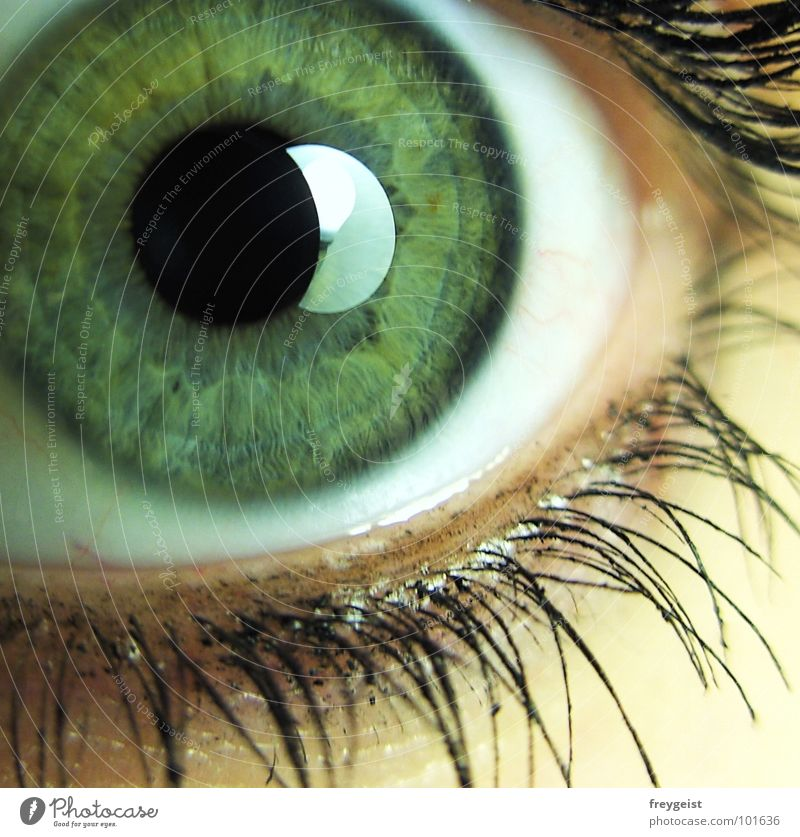 Come closer grün Auge Gefühle grau nah Wimpern Seele Pupille Regenbogenhaut