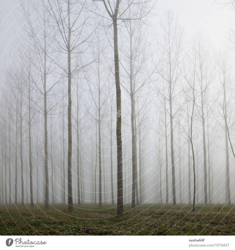 Wald im Nebel und Herbstlaub auf grünem Grund Umwelt Natur Landschaft Wetter Regen Baum Blatt träumen dunkel natürlich trist weich schwarz geheimnisvoll
