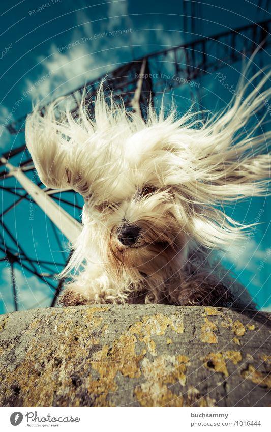 Pure Energie Freude Friseur Umwelt Tier Himmel Wolken Sonnenlicht Schönes Wetter Turm langhaarig Haustier Hund Fell 1 Stein Stahl wild blau schwarz weiß skurril