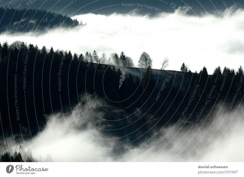 es wabert Nebel Wolken schwarz weiß abstrakt Hintergrundbild Baum Herbst Schwarzwald Wald Winter Licht Himmel Kontrast Berge u. Gebirge Schatten Wetter