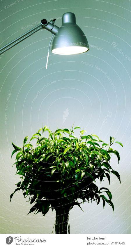 photosynthese Natur grün Baum Pflanze Einsamkeit Lampe Beleuchtung Wachstum Sträucher Dekoration & Verzierung Klarheit Schreibtisch Werkstatt hart gestellt Entwicklung