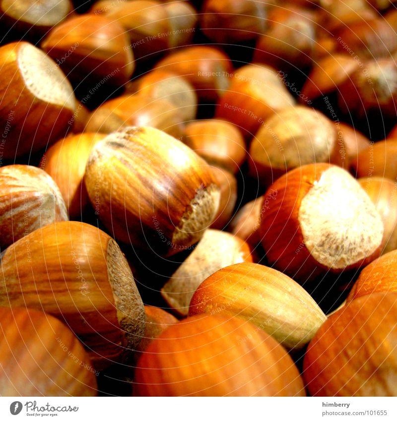 nusscase Nuss Haselnuss brechen hart Makroaufnahme Nahaufnahme Herbst nutz Ernährung Appetit & Hunger Markt Bioprodukte himbeertoni