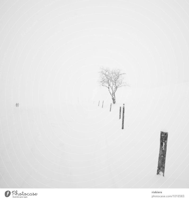 into nothingness Mensch Natur Pflanze Baum Einsamkeit Landschaft ruhig Winter Ferne Umwelt Schnee Wege & Pfade Schneefall Wetter Idylle wandern