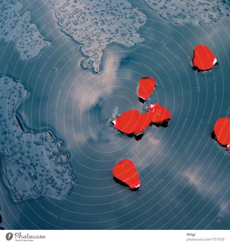 rote Rosenblätter liegen in einer Wasserpfütze Regen Unwetter nass Blatt Blume fallen Reflexion & Spiegelung Wolken Farbfleck Sommer Vergänglichkeit Wetter