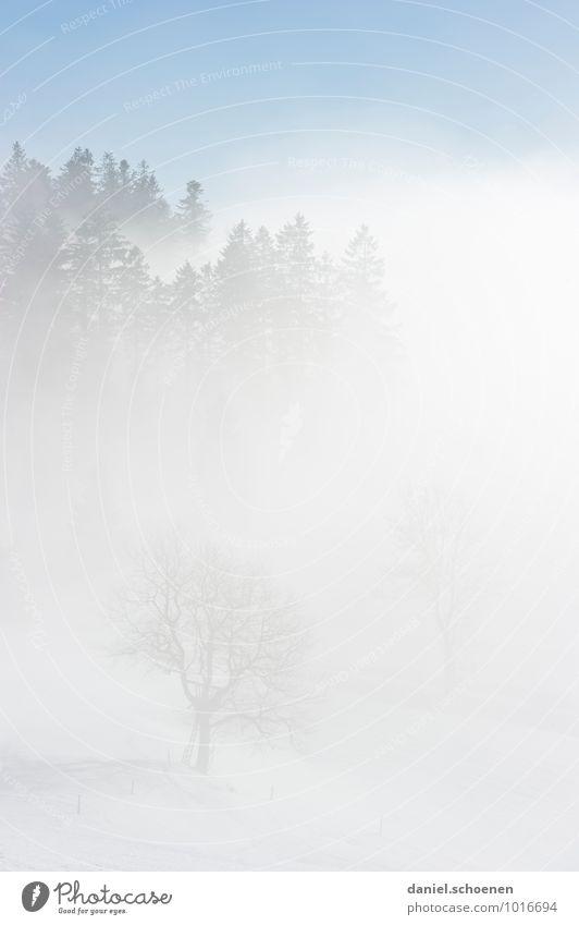 Brille beschlagen Natur Winter Nebel Eis Frost Schnee Baum Wald hell blau weiß Gedeckte Farben Menschenleer Textfreiraum links Textfreiraum rechts