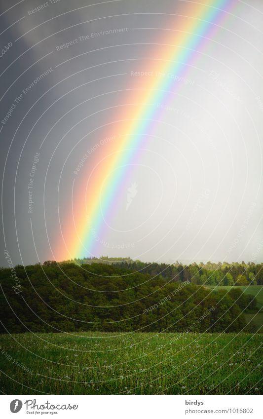multicolor borderline Landschaft Gewitterwolken Regen Wiese Wald Regenbogen regenbogenfarben leuchten ästhetisch außergewöhnlich positiv mehrfarbig Glück