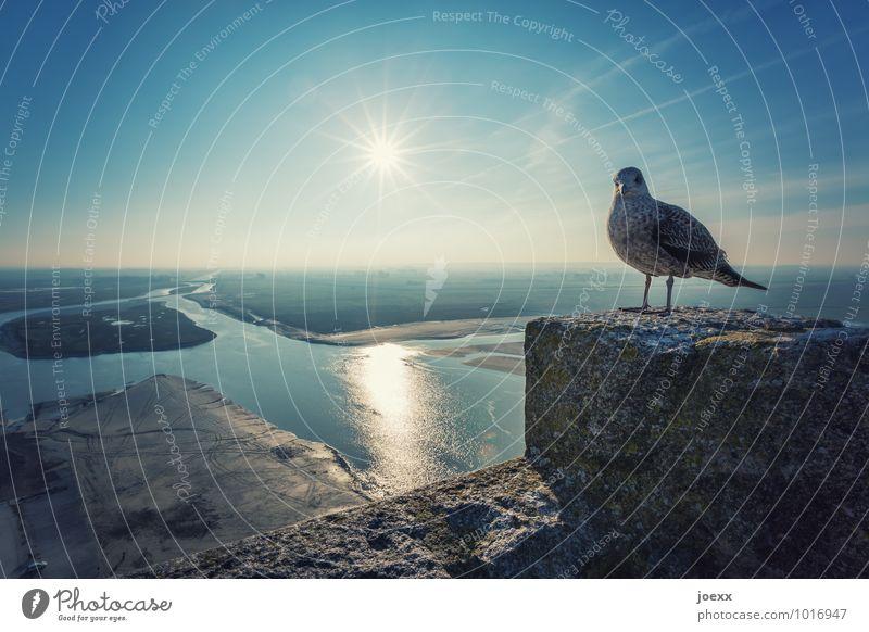 Zwischenlandung Himmel alt blau Wasser weiß Tier schwarz Wand Mauer Vogel oben Horizont hoch Insel Schönes Wetter historisch