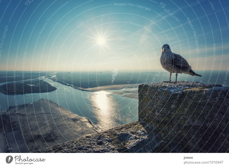 Zwischenlandung Wasser Himmel Horizont Schönes Wetter Flussufer Insel Mont St.Michel Mauer Wand Sehenswürdigkeit Vogel 1 Tier Blick alt historisch hoch Neugier