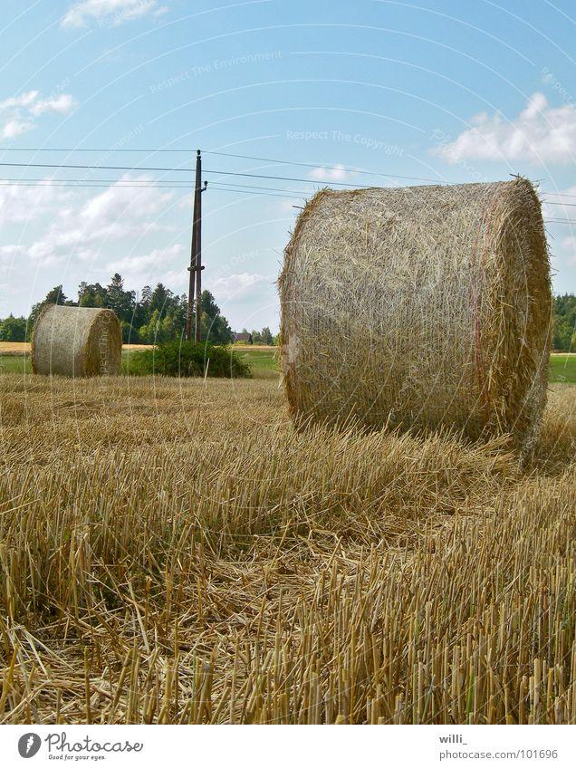 eine runde Angelegenheit Stroh Strohballen trocken Feld Strommast Stoppelfeld Ernte dreschen Mähdrescher Weizen Strohrolle Froschperspektive Sommer Natur