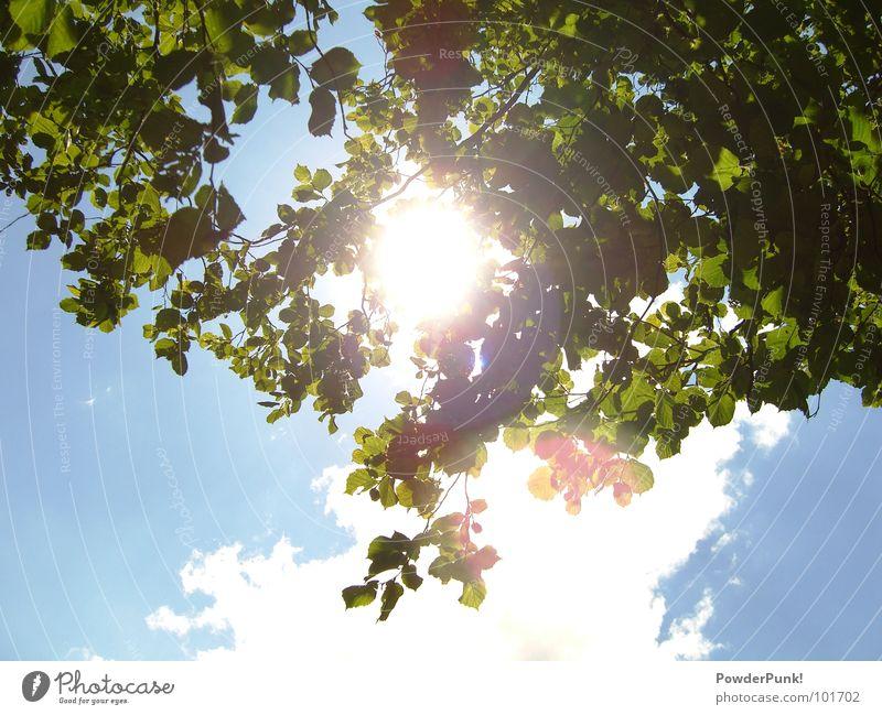 Isch glaub ich werd blind Natur Himmel Baum Sonne grün blau Sommer Wolken Wärme Physik Ast Bayern blenden himmelblau Juli Franken