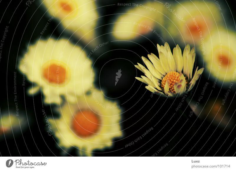 Man ist nicht immer allein Natur weiß Blume Sommer gelb Wiese Blüte Frühling Spitze Gänseblümchen
