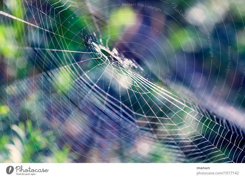 Gespinst Natur Tier Wildtier Spinne Spinnennetz bedrohlich natürlich Genauigkeit Leichtigkeit Netzwerk Präzision gefährlich Falle Hinterhalt Farbfoto