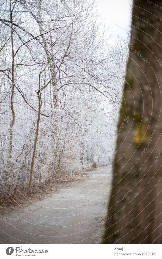 Frost Umwelt Natur Landschaft Winter Eis Schnee Baum Wald kalt weiß Farbfoto Außenaufnahme Menschenleer Tag Schwache Tiefenschärfe