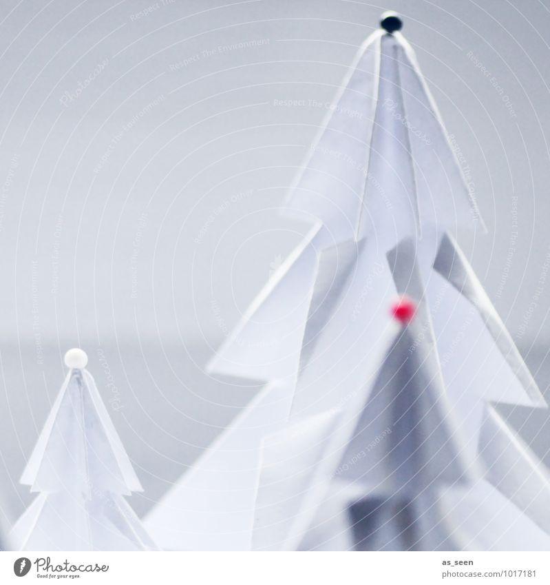 Drei Tannenspitzen Natur Weihnachten & Advent Pflanze weiß Baum rot Landschaft Winter Wald Leben Stil hell elegant Dekoration & Verzierung Design Spitze