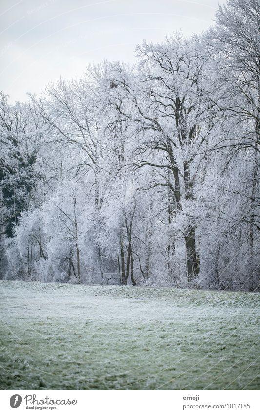 Winter Umwelt Natur Landschaft Eis Frost Schnee Pflanze Baum Wiese Wald kalt weiß Farbfoto Außenaufnahme Menschenleer Tag Totale