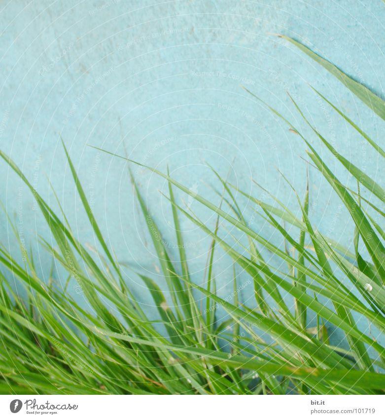 GRASWAND II weiß grün blau Pflanze Sommer Ferien & Urlaub & Reisen Einsamkeit Straße Wiese Wand Gras Garten grau Mauer Wege & Pfade Kraft
