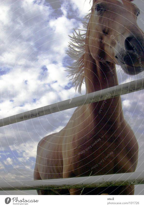 so'n ding zum drauf reiten Pferd Tier groß Schnauze Mähne Fell glänzend Wolken schlechtes Wetter Stab Zaun Wiese Weide Rennpferd Rennbahn Pferderennen