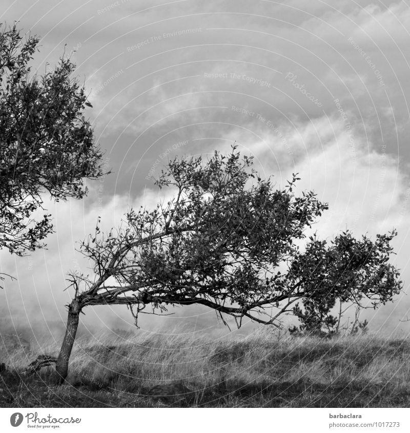 Kraft | Orkan Lothar Himmel Natur Baum Landschaft Wolken Umwelt Gras außergewöhnlich wild stehen Klima bedrohlich kaputt Wandel & Veränderung Sturm