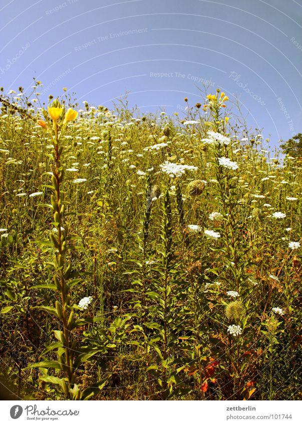 Alm Wiese Blume Blüte Gras Halm Hügel Romantik Allergiker Weide Berge u. Gebirge kuppe allergisch spyri Unkraut