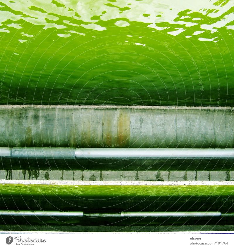 mr green Wasser grün dreckig nass Beton Fluss Dresden Brunnen verfallen Quadrat Flüssigkeit Bach Teich Verbote Gift
