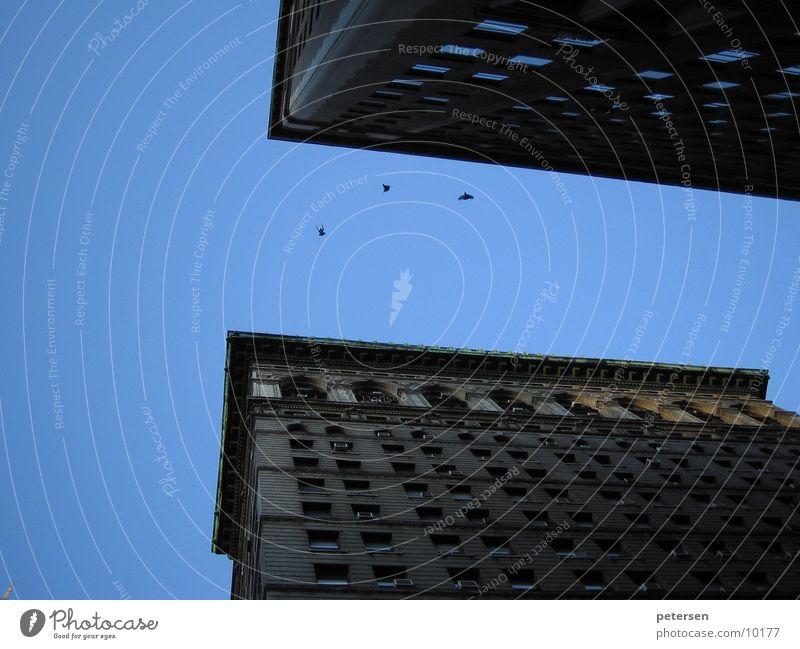 Stadtschlucht Hochhaus Vogel New York City groß tief Architektur