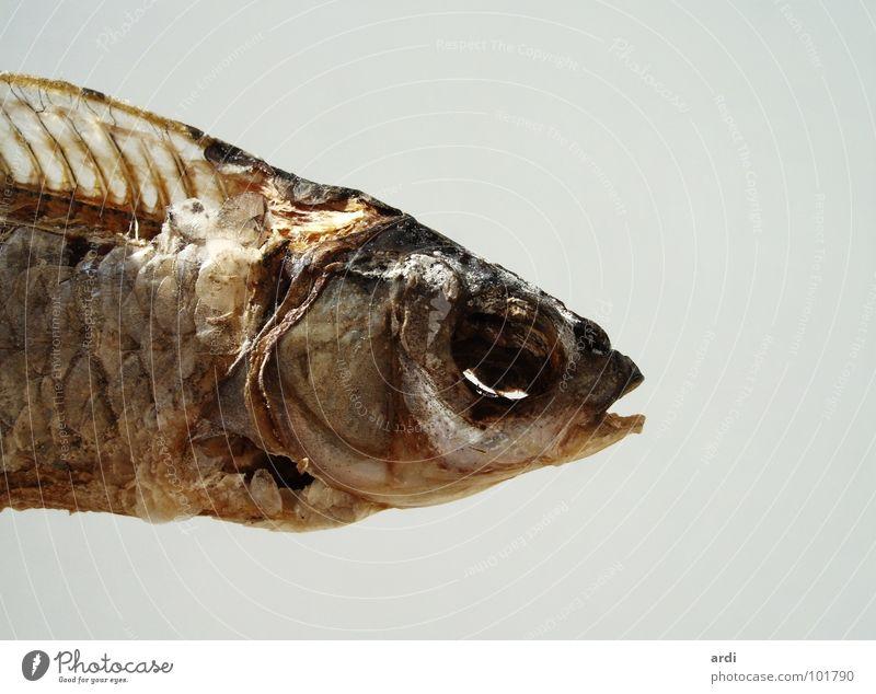 trocken und salzig Tier Tod Fisch Fleisch Scheune Dürre Skelett Salz getrocknet Fischgräte Verwesung