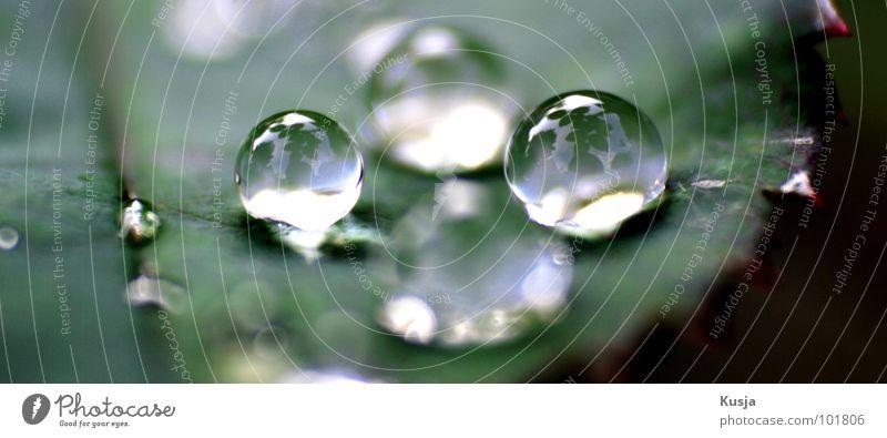 Quattro nass grün Wiese Wassertropfen Regen Reflexion & Spiegelung Natur Garten Pflanze spiegeln